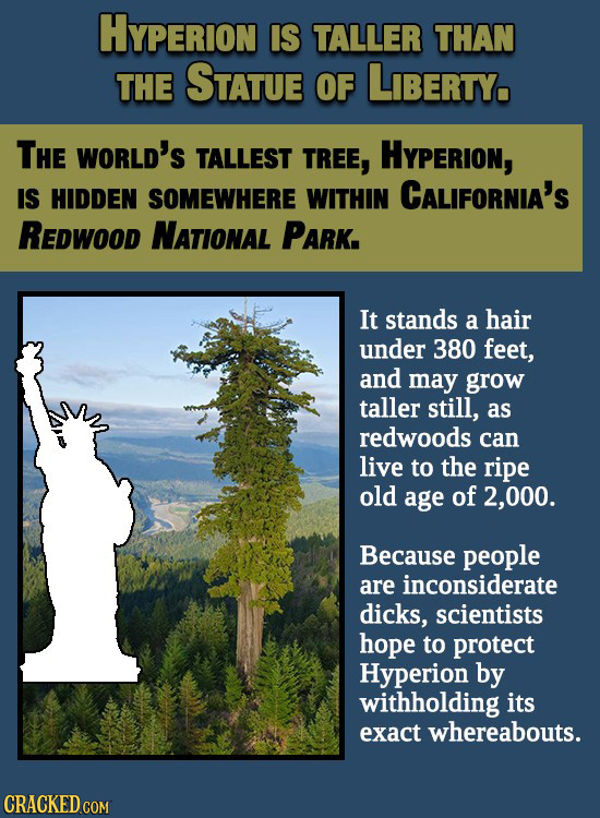 HYPERION IS TALLER THAN THE STATUE OF LIBERTY, THE WORLD'S TALLEST TREE, HYPERION, IS HIDDEN SOMEWHERE WITHIN CALIFORNIA'S REDWood NATIONAL PARK. It s