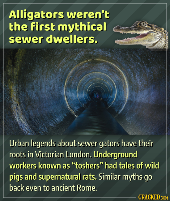 Alligators weren't the first mythical sewer dwellers. Urban legends about sewer gators have their roots in Victorian London. Underground workers known