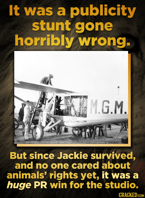 It was a publicity stunt gone horribly wrong. M.G.M. LEO FLYING LION But since Jackie survived, and no one cared about animals' rights yet, it was a h