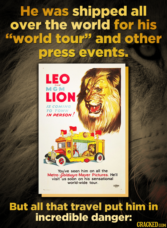 He was shipped all over the world for his world tour' and other press events. LEO THE M-G-M LION IS COMING TO TOWN IN PERSON! You've seen him on all