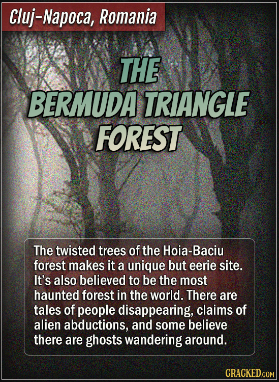 Cluj-Napoca, Romania - The Bermuda Triangle Forest - The twisted trees of the Hoia-Baciu forest makes it a unique but eerie site. It's also believed t