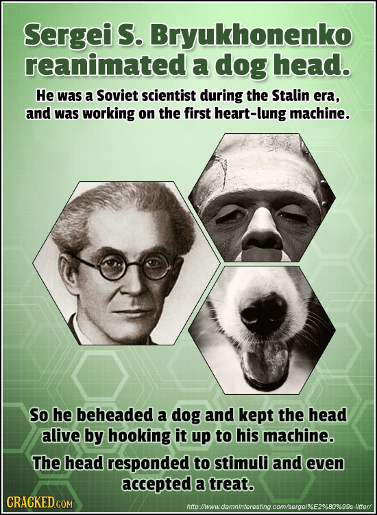 Sergei S. Bryukhonenko reanimated a dog head. He was a Soviet scientist during the Stalin era, and was working on the first heart-lung machine. So he