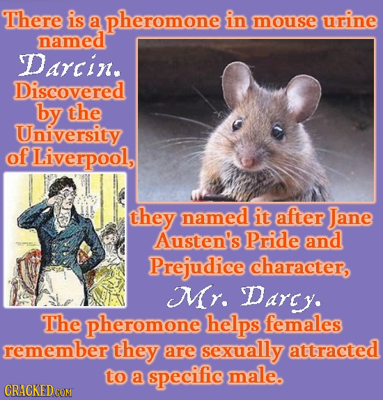 There is a pheromone in mouse urine named Darcin. Discovered by the University of Liverpool, they named it after Jane Austen's Pride and Prejudice cha