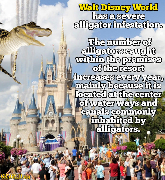 Walt Disney World has a severe alligator infestation. The numberof alligators caught within the premises of the resort increases every year, mainly be