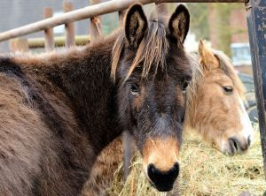 4 Ways Horse Meat Proves a Zombie Apocalypse Can Happen