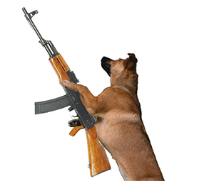The Shocking Truth About Gun Violence (By Dogs)