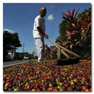 4 Reasons Why Fair Trade Coffee Is a Scam