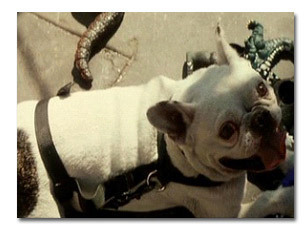 5 Movies That Prove the Action Genre Won't Let a Dog Die